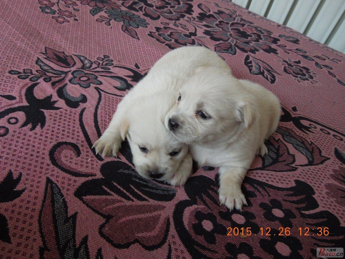 家中3只小狗狗找主人, 1只公的2只母的。仅限北京地区,希望有爱心、有能力的朋友(最好是家中有人,每天能陪伴它)能够领养它, 可回访,自取,好人一生平安。非诚勿扰!Q:515591090,写明领养狗狗,仅限北京地区。